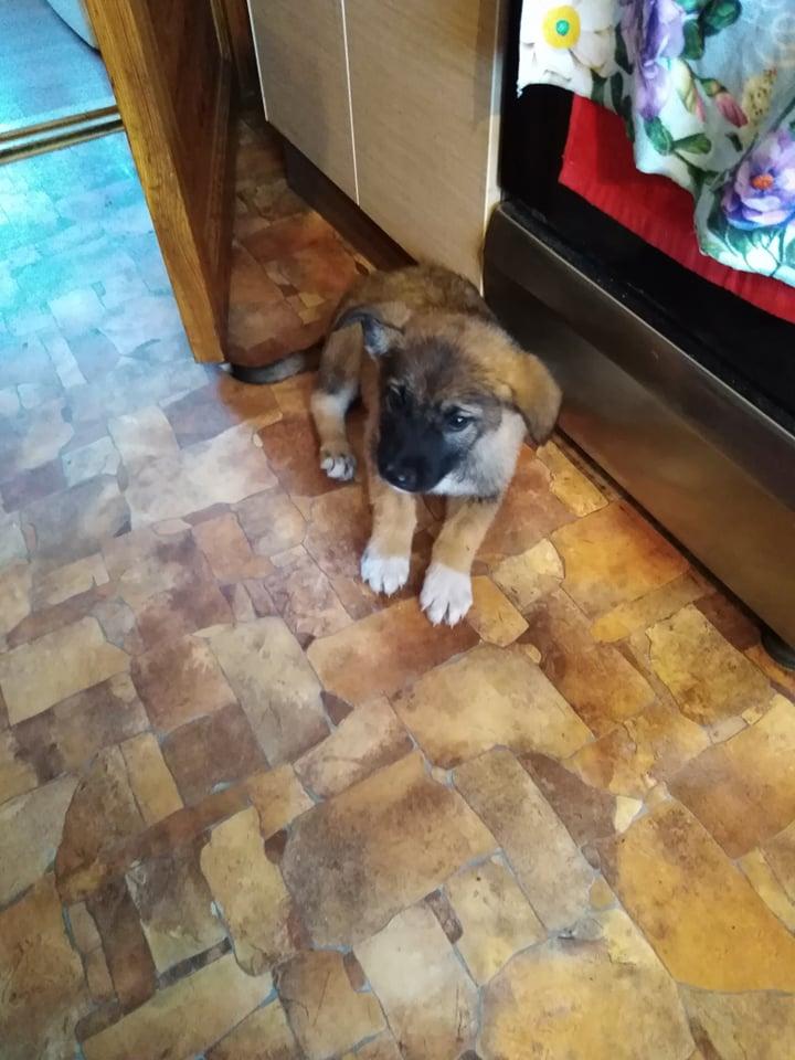 Šiuo metu išgelbėtas šunelis jaučiasi gerai ir glaudžiasi rūpestinguose ir jaukiuose namuose Panevėžio rajone. / Asmeninio archyvo nuotr.