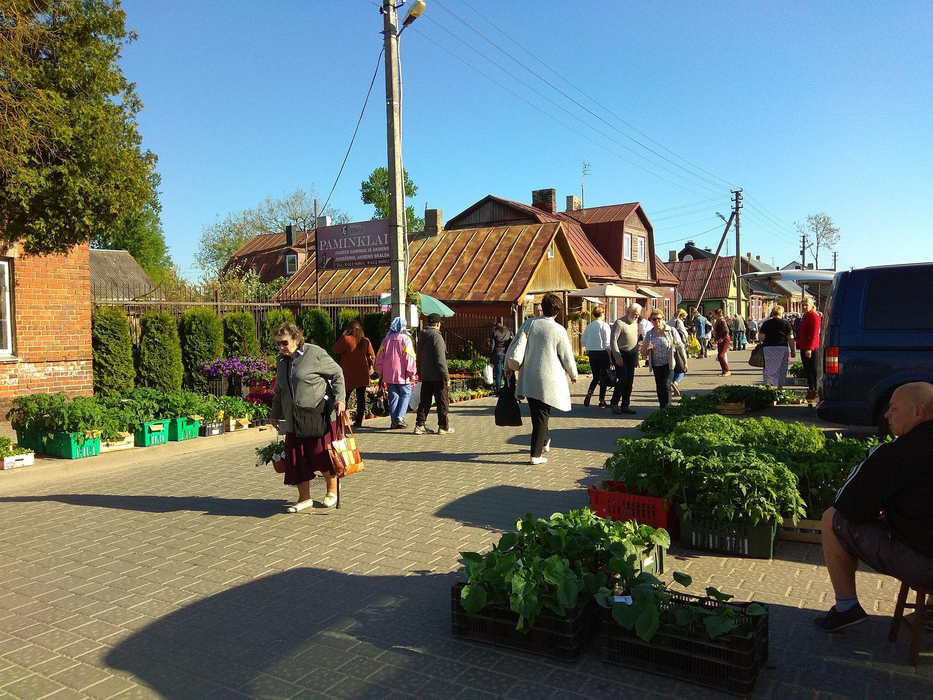 Trečiadienį Kėdainių centrinėje turgavietėje Janušavos aikštėje daržovių daigų pardavėjai vos spėjo suktis. Autoriaus nuotr.