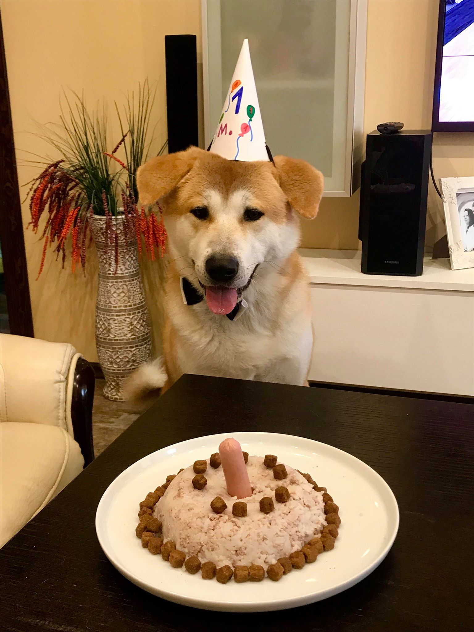 Karalių šeima Bosui netgi surengė vienerių metukų gimtadienio šventę. Bosas nekantriai laukė signalo, kada galėsiąs kibti į savo tortuką. Asmeninio archyvo nuotr.