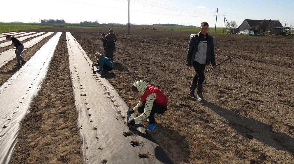 Ūkyje labai padeda vaikai, taip pat organizuojamos artimųjų ir draugų talkos, kai reikia sodinti ar sutvarkyti braškyną