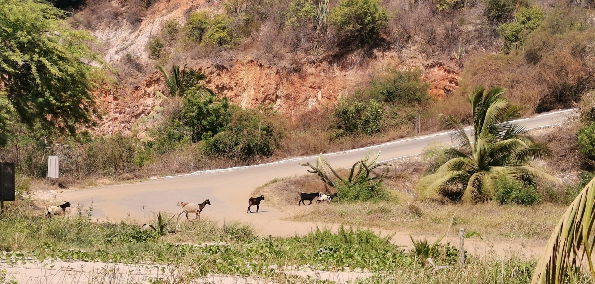 Brazilijoje daug natūralios gamtos, mažai prabangos, žmogaus įsikišimo. / Asmeninio archyvo nuotr.