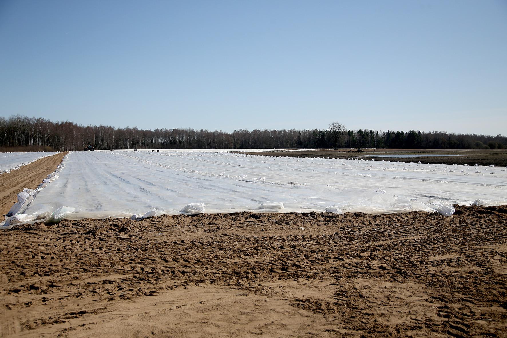 Ūkininkas Saulius Dambrauskas pažymi, jog šiųmetis bulviasodis tikrai vėluoja, mat pernai bulvės buvo sodinamos kovo 24–25 dienomis. Šiemet reikėjo palaukti dar dešimt dienų ilgiau. A. Barzdžiaus nuotr.