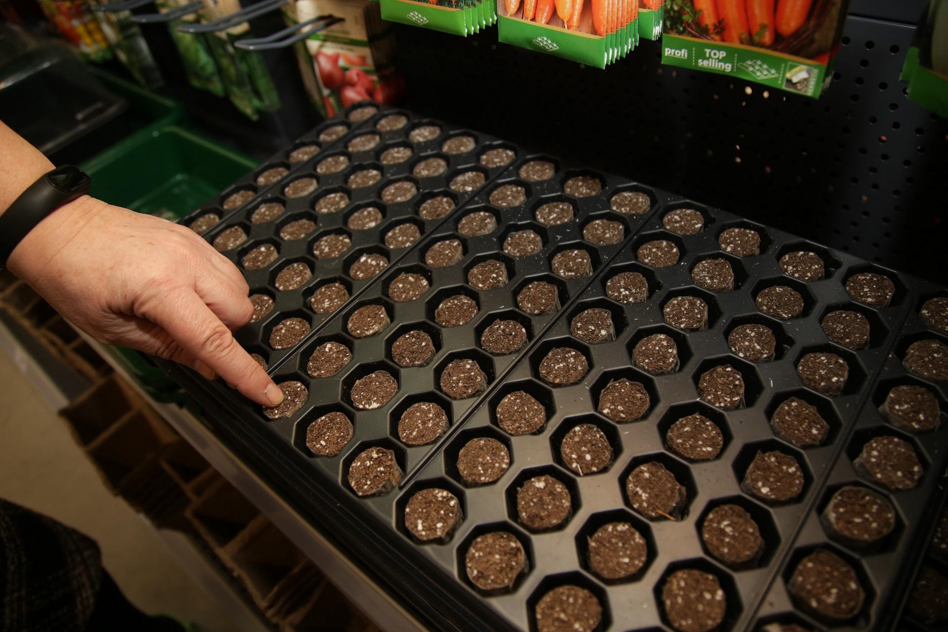 Norintys išauginti paprikas, pomidorus ar baklažanus nuo sėklytės, turėtų pasirūpinti specialiomis daigyklomis – jose augaliukai ramiai augs, laukdami, kada bus persodinti. G. Minelgaitės-Dautorės nuotr.