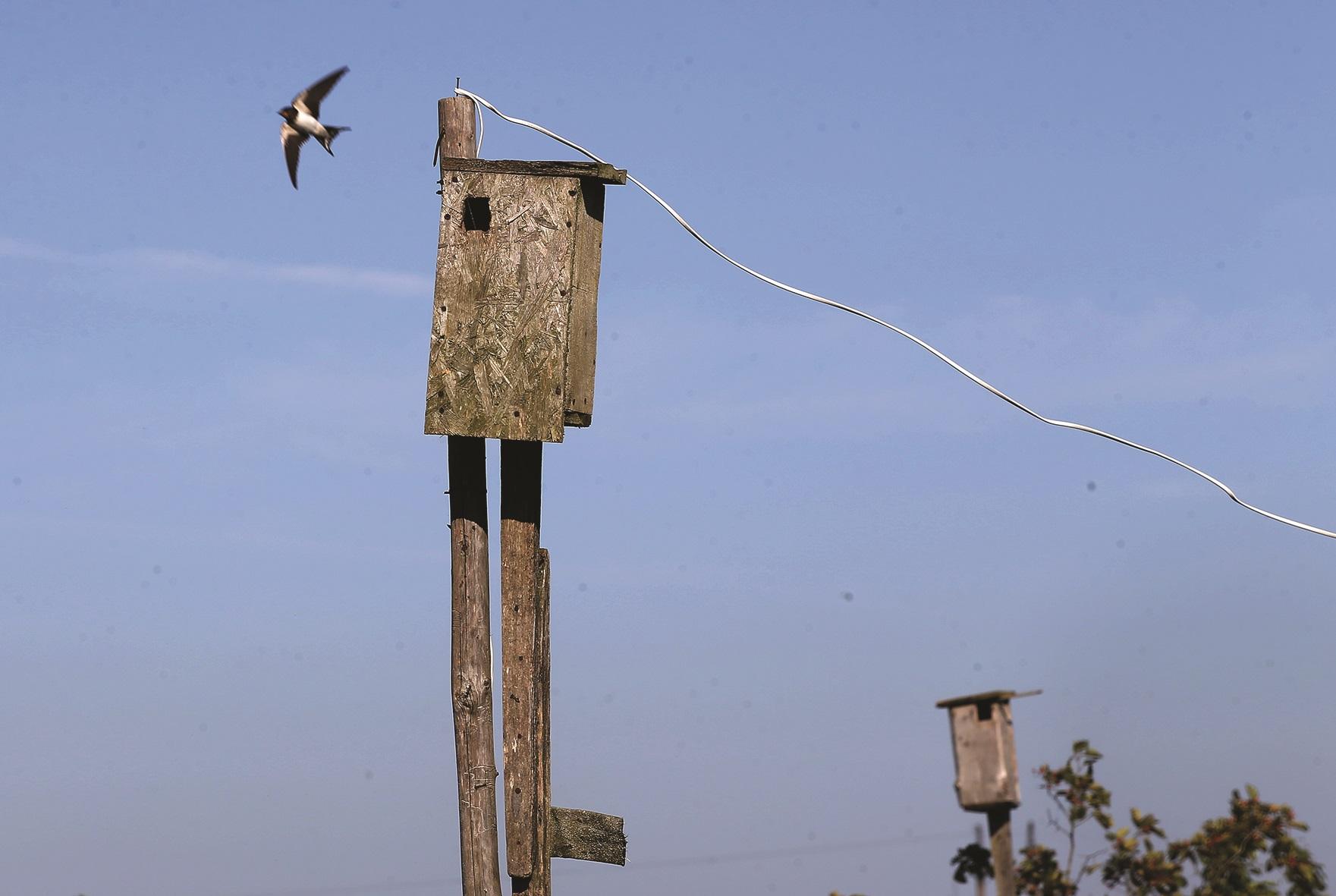 Atvykus į sodybą pasijunti lyg tikrame paukščių rezervate, draustinyje. Jų čia pulkai. Visi čirškia, čypsi, skraido. / A. Barzdžiaus nuotr.