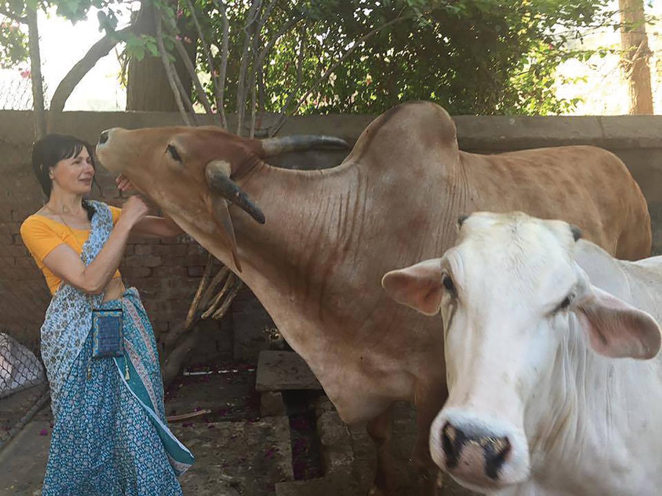 Karvės Indijoje laikomos šventomis, yra sergimos bei vertinamos, todėl mielai bendrauja su žmonėmis. Asmeninio archyvo nuotr.