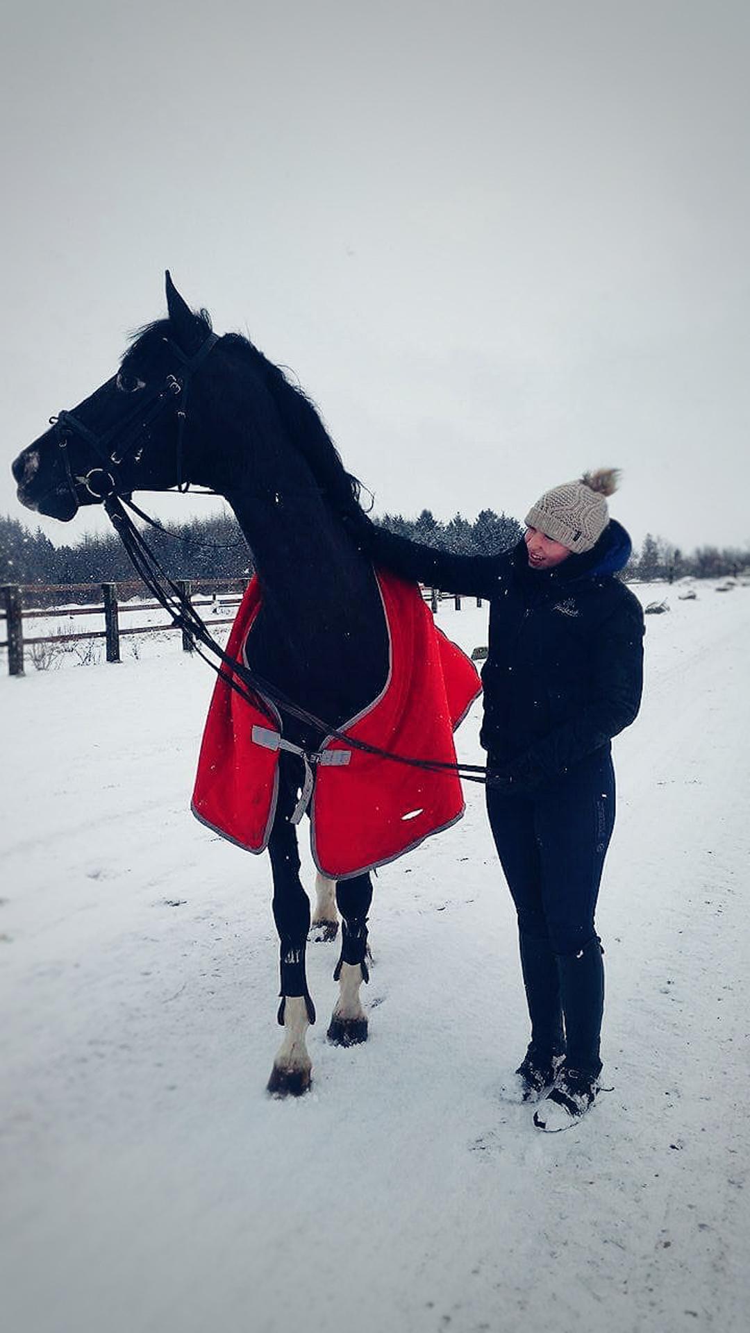 Jau 11 metų su žirgais draugaujanti Martyna Dovydaitė tikina, kad žirgais tenka rūpintis net ir šaltukui spaudžiant. / Asmeninio archyvo nuotr.