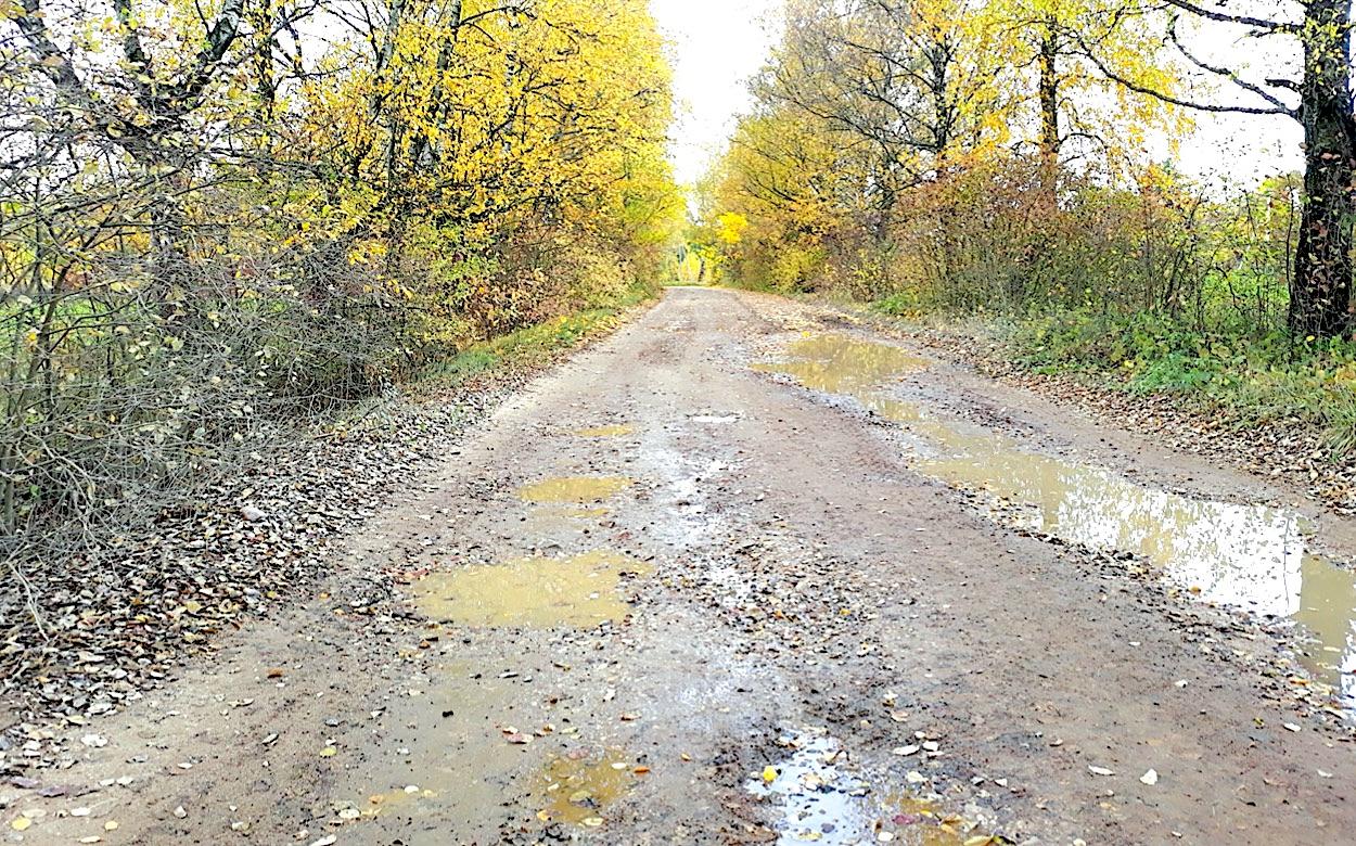 Žmonės, norintys gerokai trumpesniu keliu nukakti iš Josvainių į Vainikus, turi įveikti nemenkomis balomis bei duobėmis nusėtą žvyrkelį. / Larisos Jarašūnienės nuotr.
