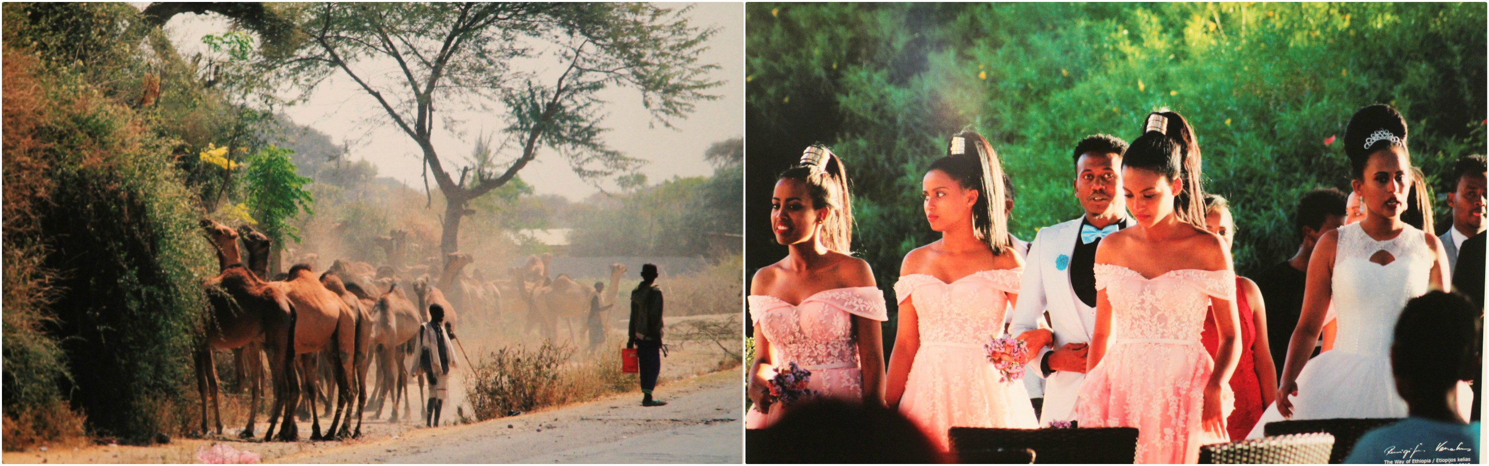 Visiškai kitas pasaulis: fotografijose – vestuvių šventės ir kasdienio gyvenimo akimirkos, kupranugarių kaimenės, praeivių veidai ir jų žvilgsniai.