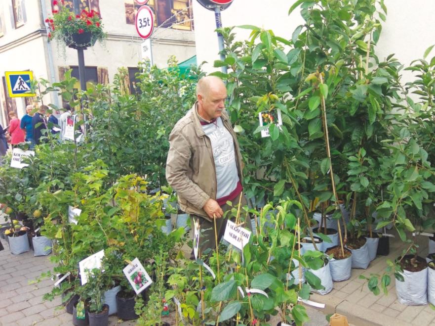 Iš Babtų atvažiavęs sodininkas Zenonas sakė, kad žmonės daugiausia dairosi obelaičių. / Dimitrijaus Kuprijanovo nuotr.