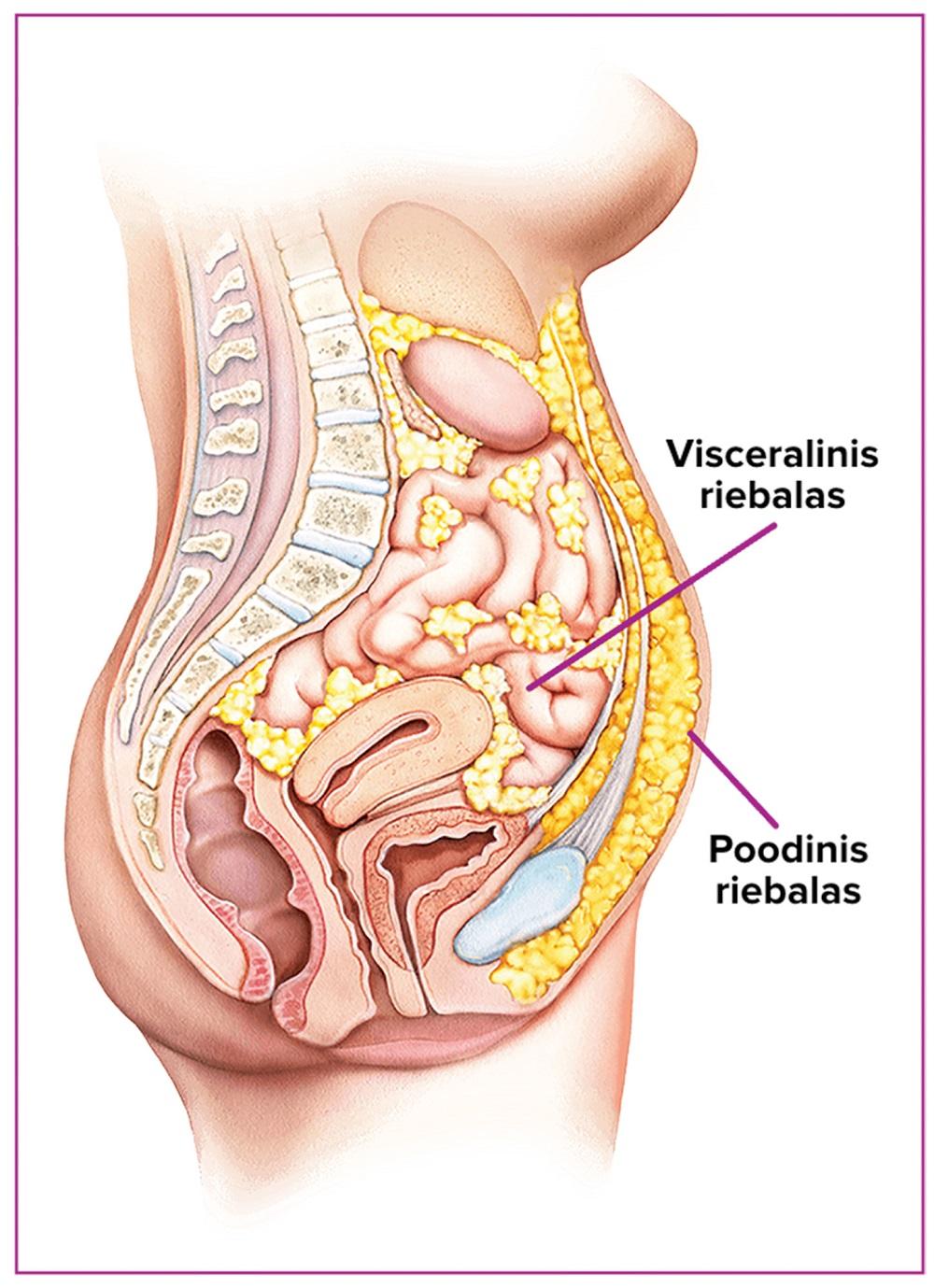 Vidiniai riebalai nesikaupia aplink rankas ar šlaunis – jais aptenka mūsų liemuo bei vidaus organai.
