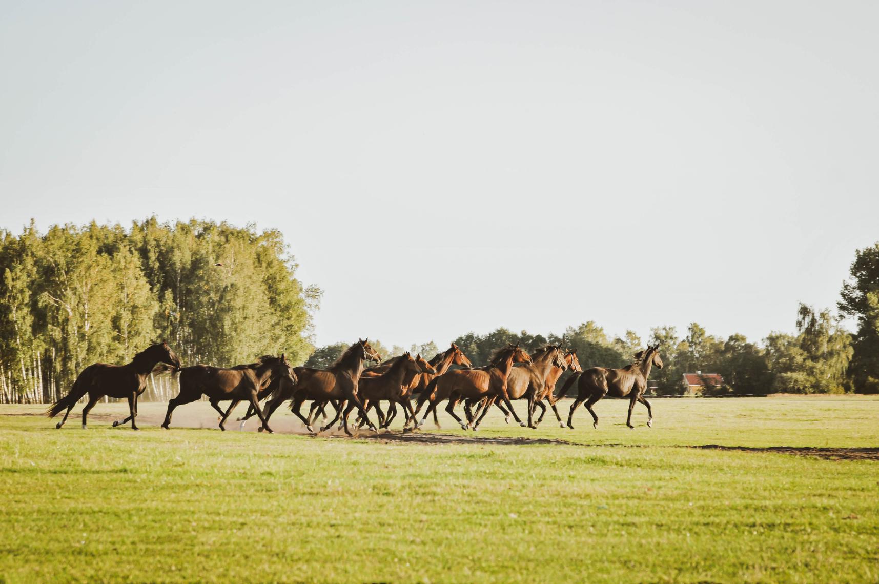 Žirgams skirti visi 25 hektarai ploto – praktiškai po vieną hektarą kiekvienam žirgui.
